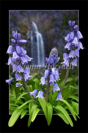 Bluebells-Waterfall-1