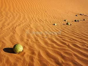 Melons on sand dunes