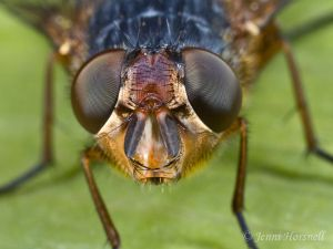 Fly_Head_Detail_7505